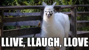 Alpaca Meme - 15 llamas showing you how to win at llife meme llama alpaca and