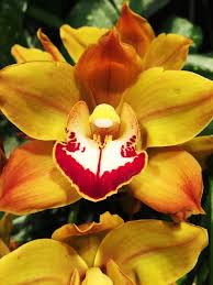 5 crazy things you didn u0027t know about orchids smithsonian insider