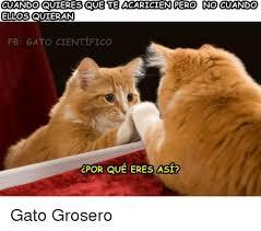 imagenes groseras de gatos cuando quieres que te acaricien pero no cuando ellos quieran fb gato