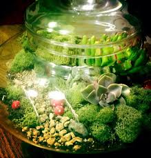 9 lush terrariums u0026 how to make your own