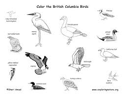 biome coloring pages 28 images taiga coloring pages coloring