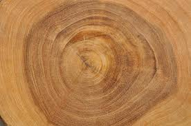 wood tree rings images File growth rings kolkata 2011 06 04 3709 jpg wikimedia commons JPG