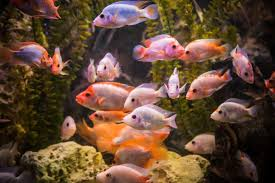 no more display or sale of ornamental fishes social issue