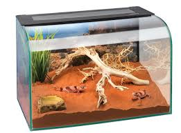 amazon com exo terra habisphere desktop terrarium pet supplies