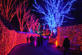 Zoo Light Dc by 100 Zoo Lights In Dc Smithsonian National Zoological Park