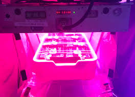 Plants That Do Not Need Much Sunlight by Nasa Plant Researchers Explore Question Of Deep Space Food Crops