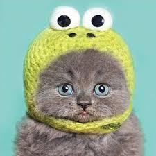 Cat Birthday Cards Funny Humour Birthday Greeting Card Grey Cat Kitten In Kermit Hat
