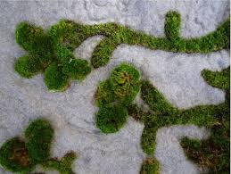 Moss Rug Grow A Grass Rug For Your Bedroom Treehugger