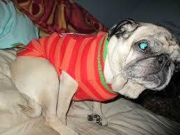 petsmart pet clothing u0026 toys for christmas emily reviews