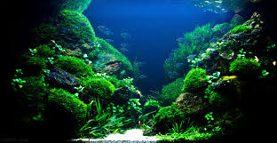 Okeanos Aquascaping The Top 10 Most Beautiful Freshwater Aquascapes Of 2012 Fpsbutest