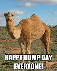 Camel Memes - funny animated gif animated gifs caleb the camel