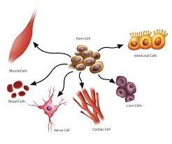 stem cell therapy for orthopedic injuries and arthritis new york