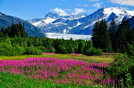 Alaska scenery images Pictures alaska usa nature mountains lupinus landscape photography jpg