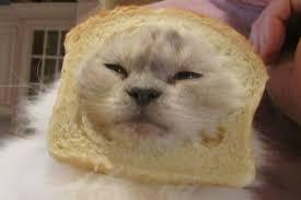 Cat Breading Meme - meme me polloplayer