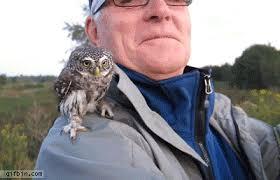 Owl Shoulder - gifbin baby owl on a s shoulder gif