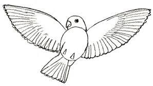 draw bird draw step step