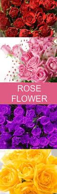send roses 10 best flower images on flowers send roses