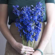 delphinium flower delphinium flower moxie