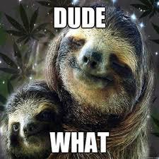 sloth meme dump album on imgur
