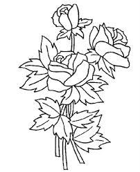 imagenes para colorear rosas colorea tus dibujos rosas para colorear y pintar