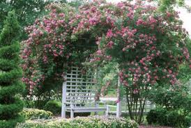 Build A Rose Trellis Pruning And Training Climbing Roses Step By Step