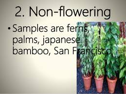 growing ornamental plants