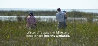 Wiscons by Wisconsin Wetlands Association Helping People Care For Wetlands