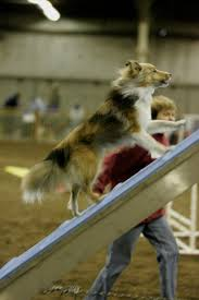Backyard Agility Course How To Find The Right Agility Instructor For You And Your Dog