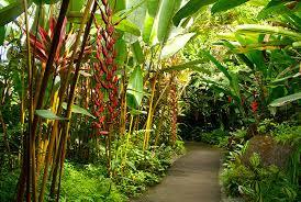 Kona Botanical Gardens Top 5 Activities For On The Big Island Hawaii
