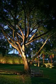 tree lights landscape garden outdoor decor