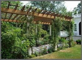 Grape Vine Pergola by Download Vines For Pergola Garden Design