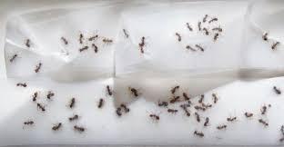 ameisen k che ameisen bekämpfen im haus und im garten hausmittel gegen ameisen