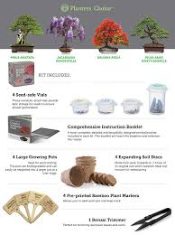 amazon com planters u0027 choice bonsai starter kit the complete kit