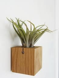 airplant cube indoor plant design u2013 etairnity airplants