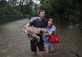 hurricane harvey pet stories rescues reunions animal refugees