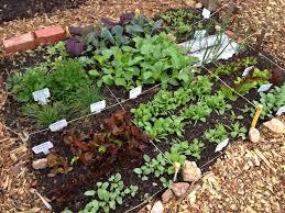 square foot gardening flowers grow it eat it 5 1 13 6 1 13