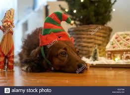 real christmas tree house stock photos u0026 real christmas tree house