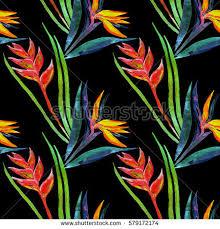 strelitzia bird paradise plant flower heliconia stock illustration