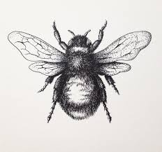 bee drawing images bumblebee drawing by lordcolinoneal on