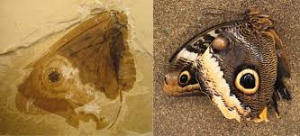 butterflies forty million years before butterflies phenomena