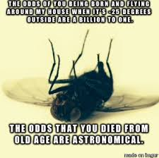 Fly Meme - bad luck winter fly meme on imgur