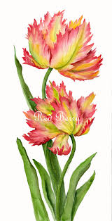 Images Of Tulip Flowers - floral art watercolor painting original tulips flower art spring
