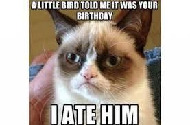 Happy Birthday Cat Memes - best collection of funny happy birthday meme 123happybirthday in