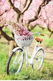 best 25 spring photography ideas on pinterest flower