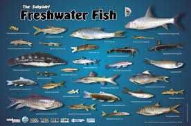 Freshwater Fish Zoo Outreach Organization