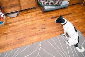 Is Laminate Flooring Good For Pets Bobi Pet Saved Me From A Sea Of Dog Hair The Broke Dog