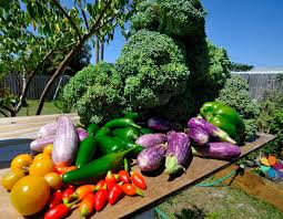 Natural Pesticides For Vegetable Gardens by 6 Steps To Your Delicious Vegetable Garden
