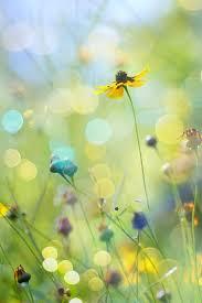 best 25 meadow flowers ideas on pinterest flower pictures