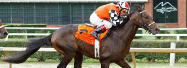 West Virginia how far can a horse travel in a day images West virginia race track horse racing mountaineer casino jpg