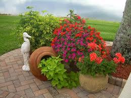 1332 best container garden images on pinterest plants flower